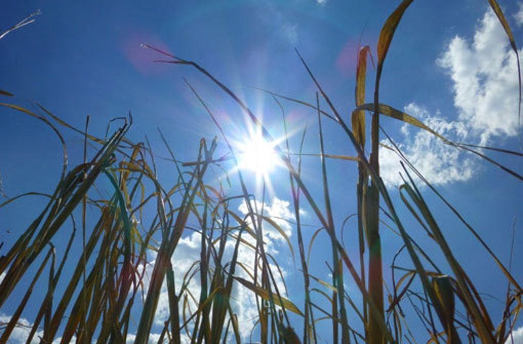 Wann kommt er denn nun endlich, der Sommer? Meteorologe Christian Kronfeldner hat gar nicht so schlechte Aussichten für Stuttgart. Foto: Leserfotograf blickwinkel