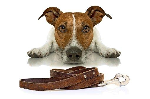 Teilzeit-Herrchen für den Hund
