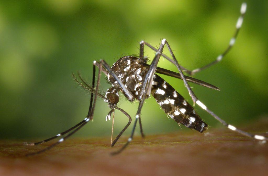 Das Virus wird von Stechmücken übertragen. Foto: dpa
