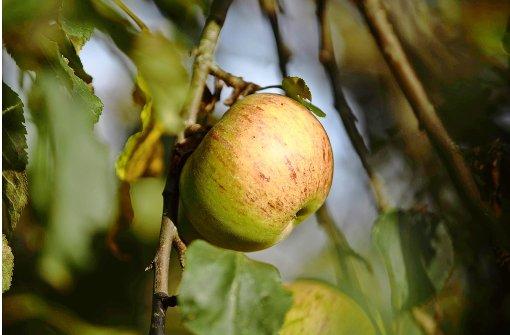 Die Früchte der Voraussicht der Urgroßväter