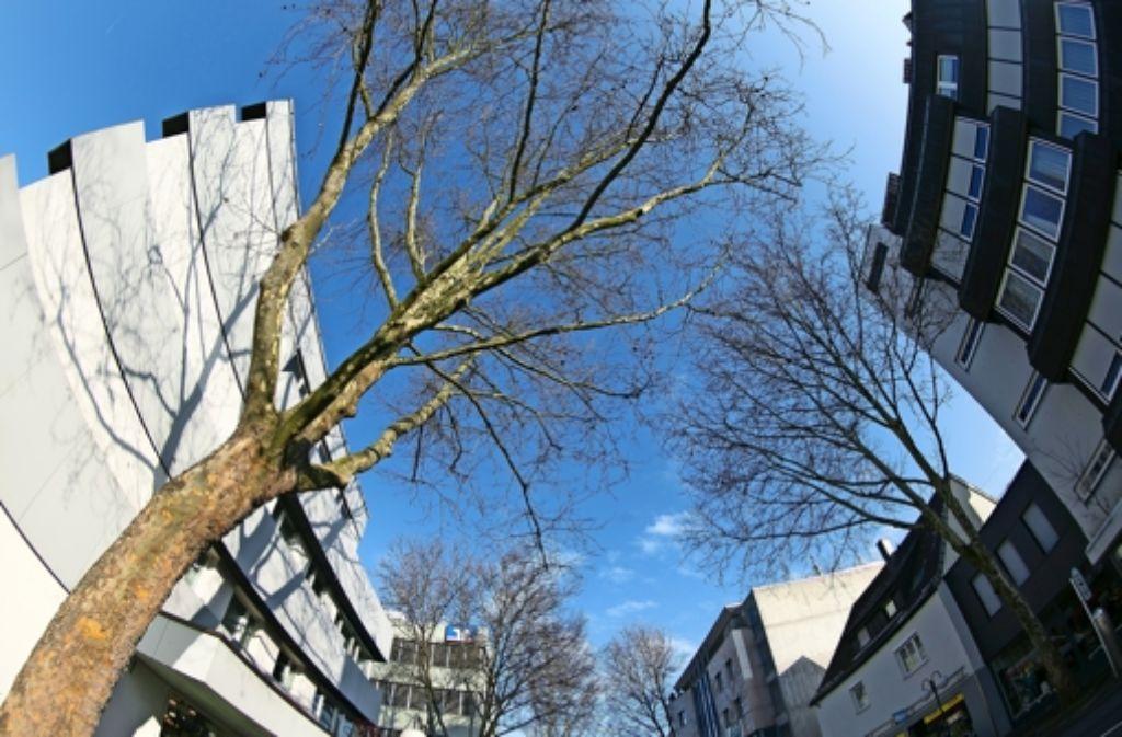 Die  Tage der Bäume an der Esslinger Straße in Nellingen sind gezählt. Foto: Horst Rudel