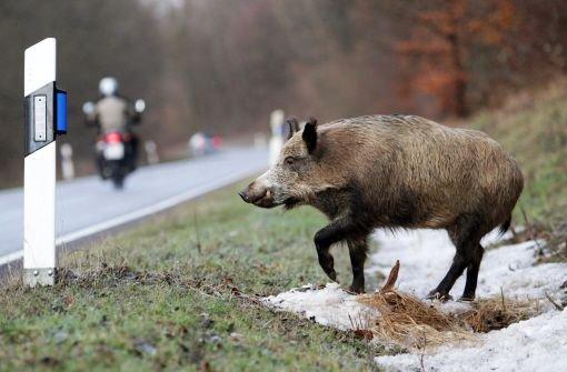 Rotte Wildschweine verursacht Unfall