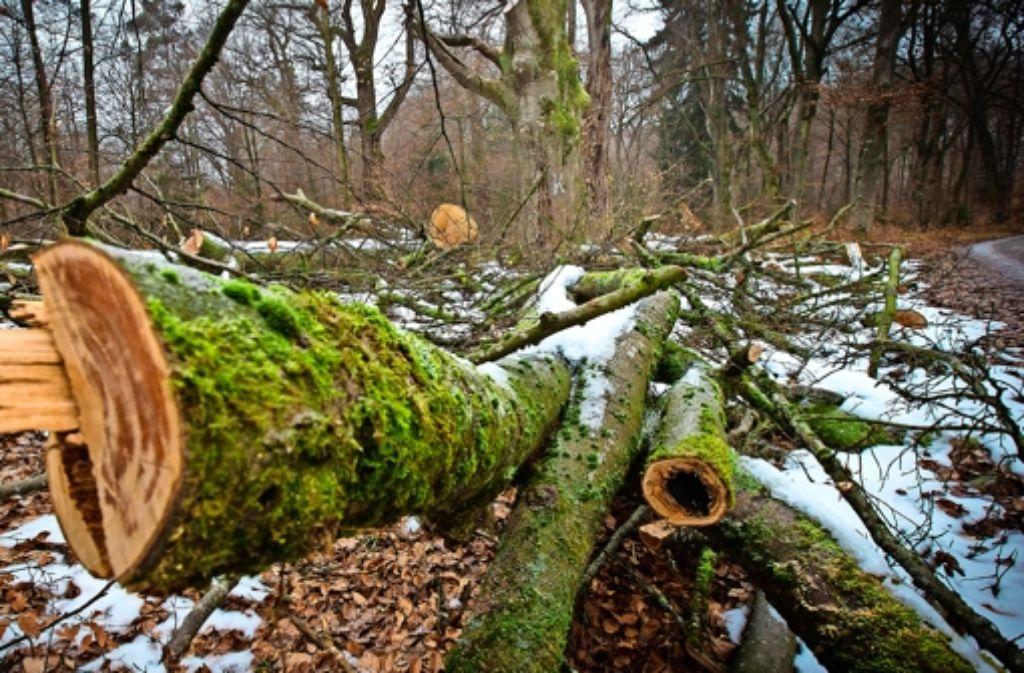 Gefällt werden im Naturschutzgebiet nur  Baumveteranen, die drohen. auf die Zufahrt zum Bärenschlössle zu stürzen. Foto: Lg/Achim Zweygarth