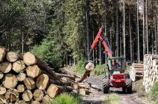 60-jährige Waldarbeiterin wird von Baum erschlagen