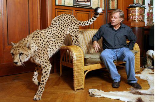 Männer, die auf große Katzen stehen