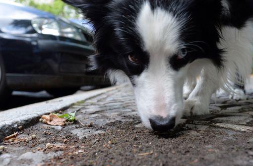 Gefährliche Köder für Hunde ausgelegt