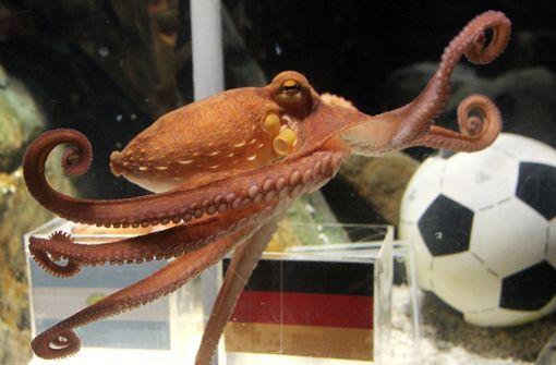 Japanisches WM-Orakel zu Sashimi verarbeitet
