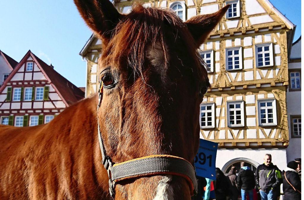 Der traditionelle Pferdehandel findet am Pferdemarktdienstag statt. Foto: LKZ/Otto