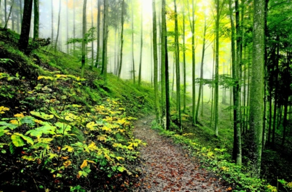 Der Wald ist gut für den Artenschutz – und auch für die Seele des Menschen. Foto: Wahl/fotolia