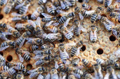Mann kann Wohnung wegen Bienenschwarm nicht verlassen