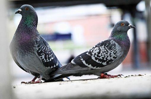 Mit Taubendreck ist nicht zu spaßen