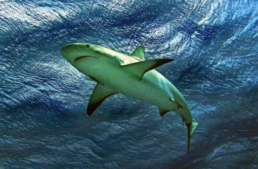 Gefährdeter Meeresräuber