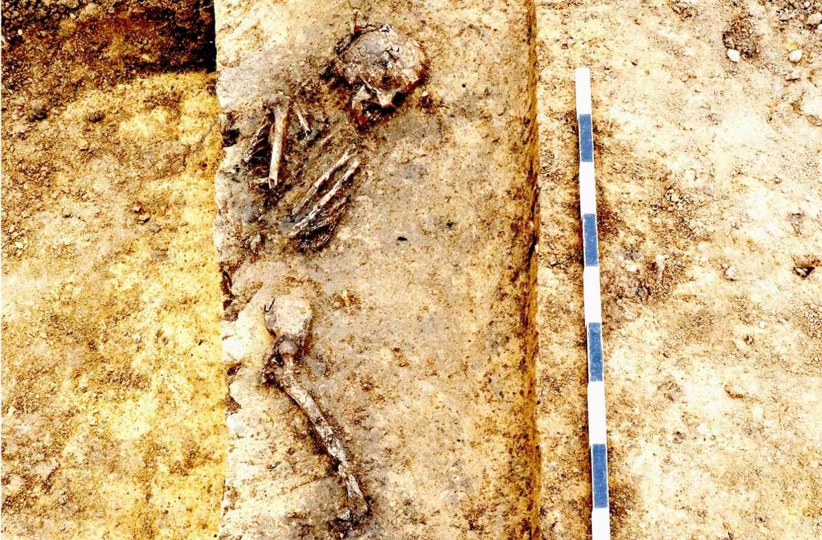 Bei den Rettungsgrabungen im Leinfelder Baugebiet Schelmenäcker wurde das Skelett einer erwachsenen Frau gefunden. Foto: Landesamt für Denkmalpflege/Archaeo-BW GmbH