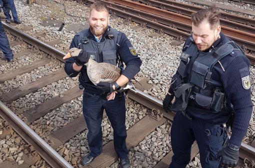 PETA verleiht der Stuttgarter Polizei eine Urkunde