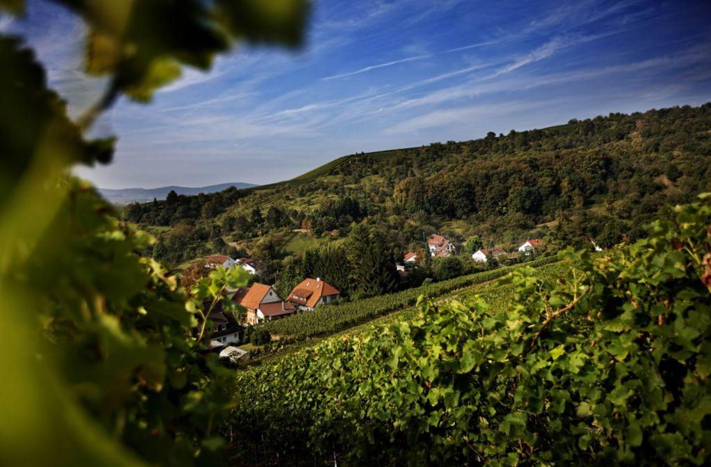 Streuobstwiesen und Weinberge - der Rems-Murr-Kreis nahe Stuttgart ist ein Eldorado für Naturbegeisterte und Wanderer. Wir haben 15 Tipps für einen Ausflug ins Remstal oder den Schwäbischen Wald. Foto: Stoppel