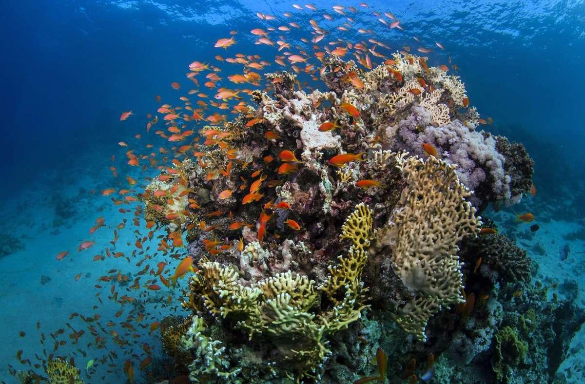 Die Frau war in der Nähe des beliebten Great Barrier Reefs von einem Hai angegriffen worden. Foto: dpa/James Cook University