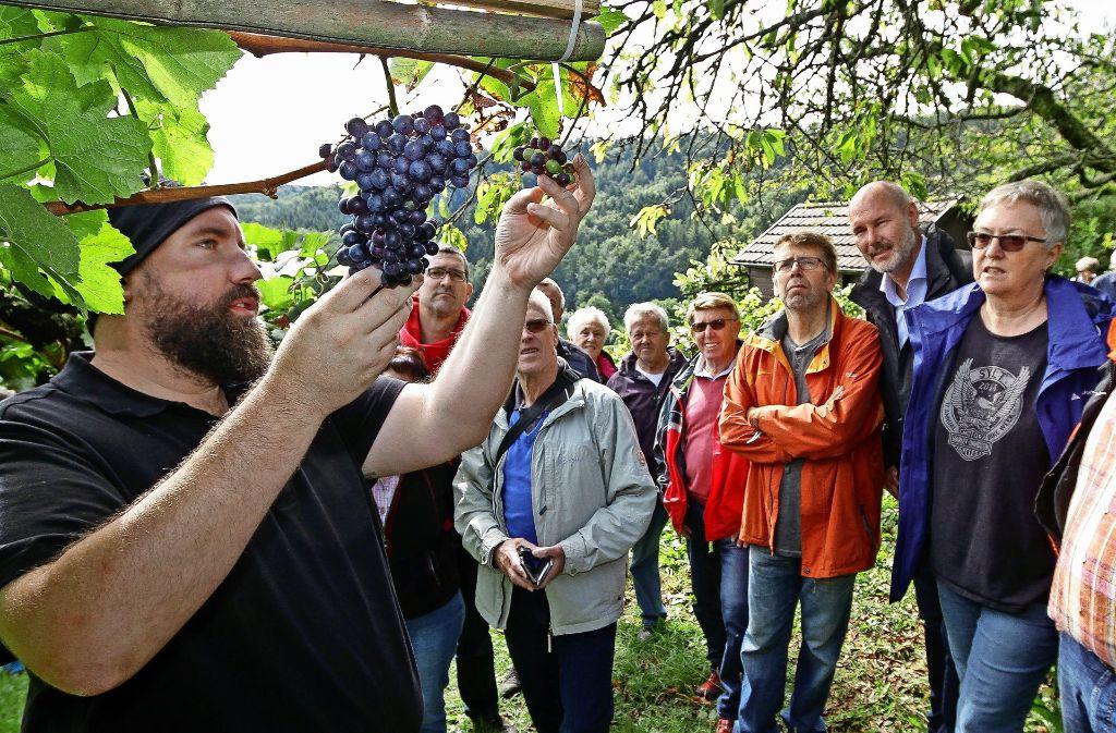 Winzermeister Heiko Fink (links) erklärt den Besuchern, auf was bei der Lese geachtet werden muss. Foto: factum/Bach