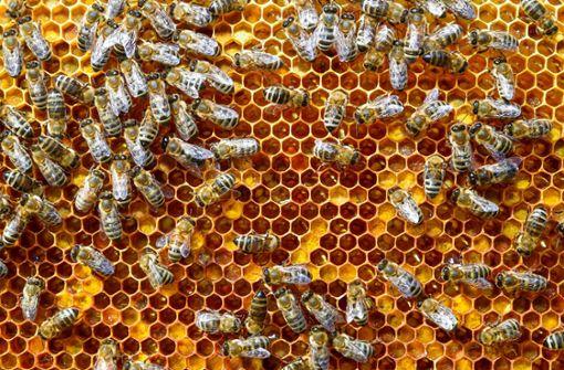Naturschützer fordern mehr Engagement gegen Insektensterben
