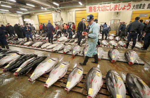Tokios Reiche fürchten den Einfall der Kanalratten