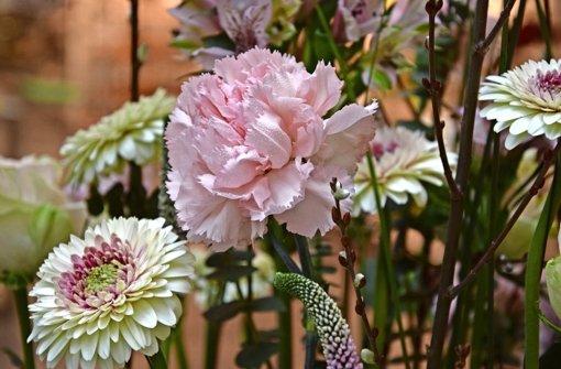 Floristen stimmen auf Frühling ein