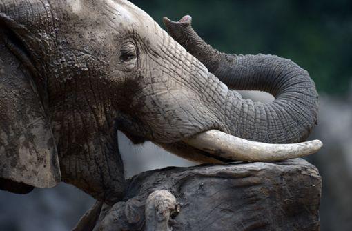 Wilder Elefant tötet 62-Jährigen in der Nähe eines Nationalparks