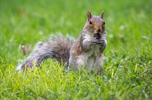 Verspieltes Eichhörnchen hat Spaß auf Rutsche