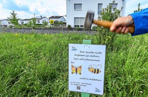 Nicht nur auf Wiesen: Leonberg soll richtig aufblühen