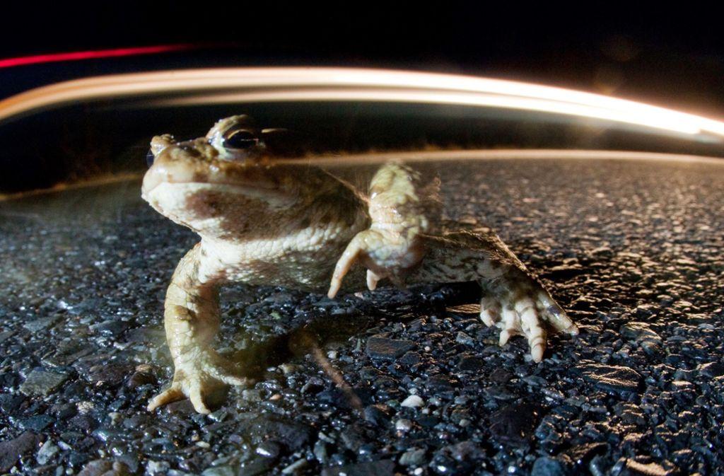 Auf den Wanderstrecken der Tiere sei Schrittgeschwindigkeit nötig wie in einer Spielstraße. Foto: dpa/Patrick Pleul