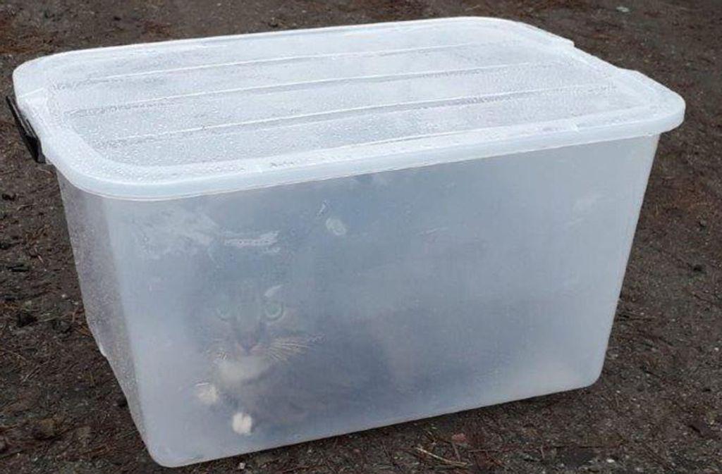 Die Katze Molly liegt auf einem Waldweg in der Plastikbox. Eine Spaziergängerin rettete das Tier aus dem Gefängnis. Foto: Tierheim Neustrelitz