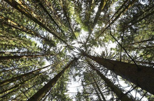 Bäume können das Klima retten