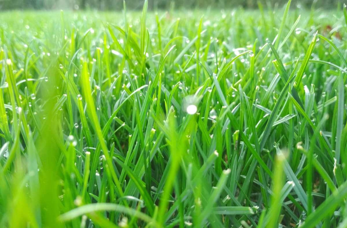 Wenn es immer wieder regnet, bleibt der Rasen durchgehend feucht. In diesem Artikel zeigen wir Ihnen, wie Sie nassen Rasen mähen können. Foto: Sashko / Shutterstock.com