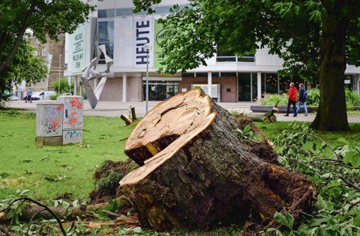 Die zerstörten Bäume sind teils über 100 Jahre alt