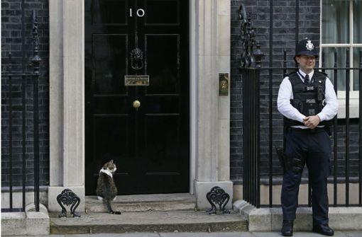 In der Downing Street öffnet man Kater Larry Tür und Tor