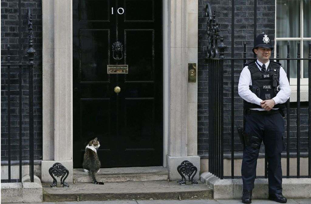 Kater Larry wartet auf Einlass in der Downing Street No. 10. Foto: AP
