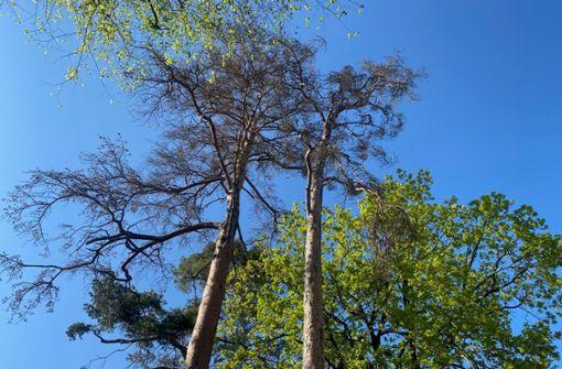 Die Bäume sind nicht auf der Höhe