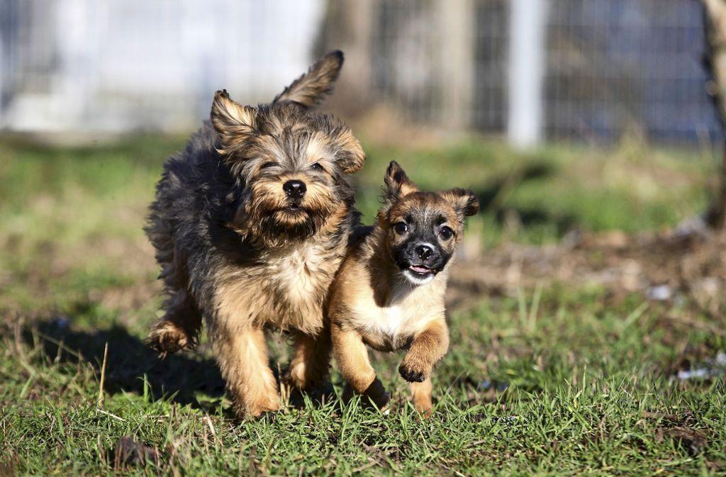 Wer in Mannheim einen Hund aus dem Tierheim holt, der spart bald die Hundesteuer. Foto: picture alliance/dpa/Clara Rechenberg