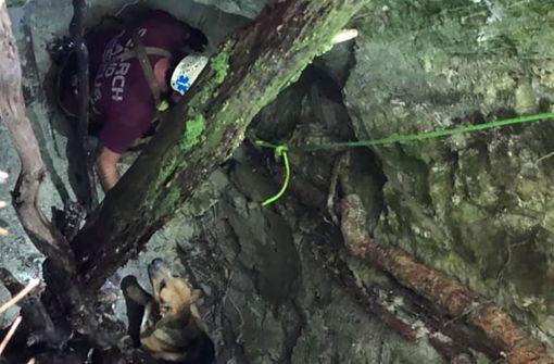 Leckerli rettet Hund aus neun Meter tiefem Loch