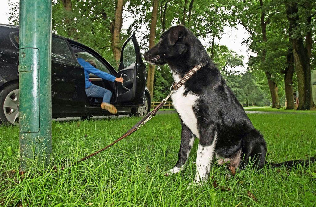 Immer wieder werden Haustiere von ihren Besitzern ausgesetzt. Foto: dpa
