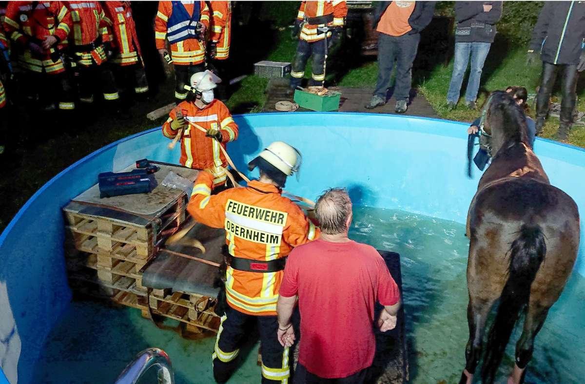 Das Pferd musste aus dem Pool befreit werden. Foto: dpa/privat