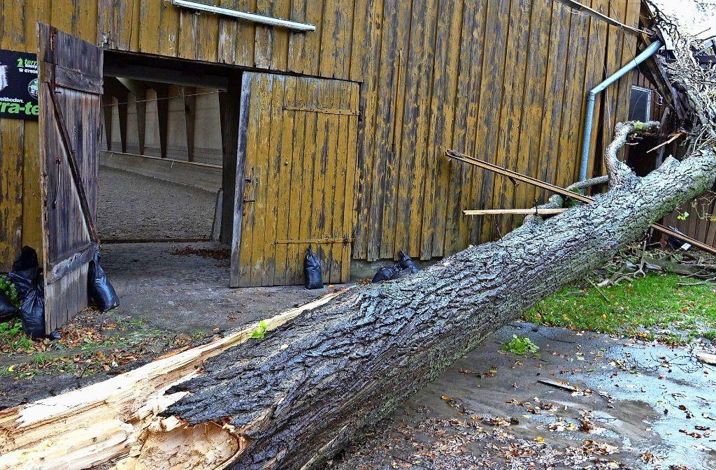 Der etwa 25 Meter lange Baum hat glücklicherweise nur die hinterste Pferdebox getroffen, in der kein  Tier stand. Foto: 7aktuell.de/Alexander Hald