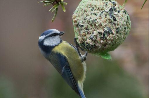 Was man im Winter für Vögel tun kann