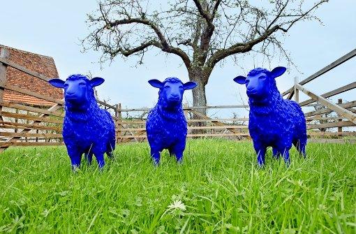 Der den Schafen gefühlvoll an die Wolle geht
