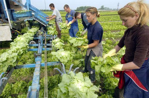 Gemüseernte im Südwesten geht deutlich zurück