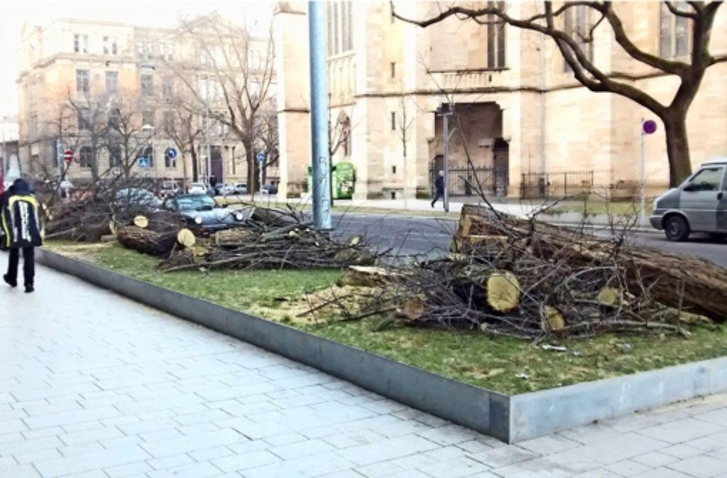 Die gefällten Bäume  werden noch in diesem Frühjahr ersetzt. Foto: privat
