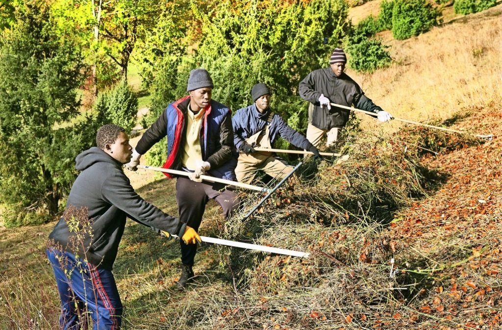 Voller Einsatz: Mehrere   Flüchtlinge, die in Dürnau untergebracht sind, helfen den Naturfreunden bei der Wacholderheide-Pflege am Unteren Boßler. Foto: Horst Rudel