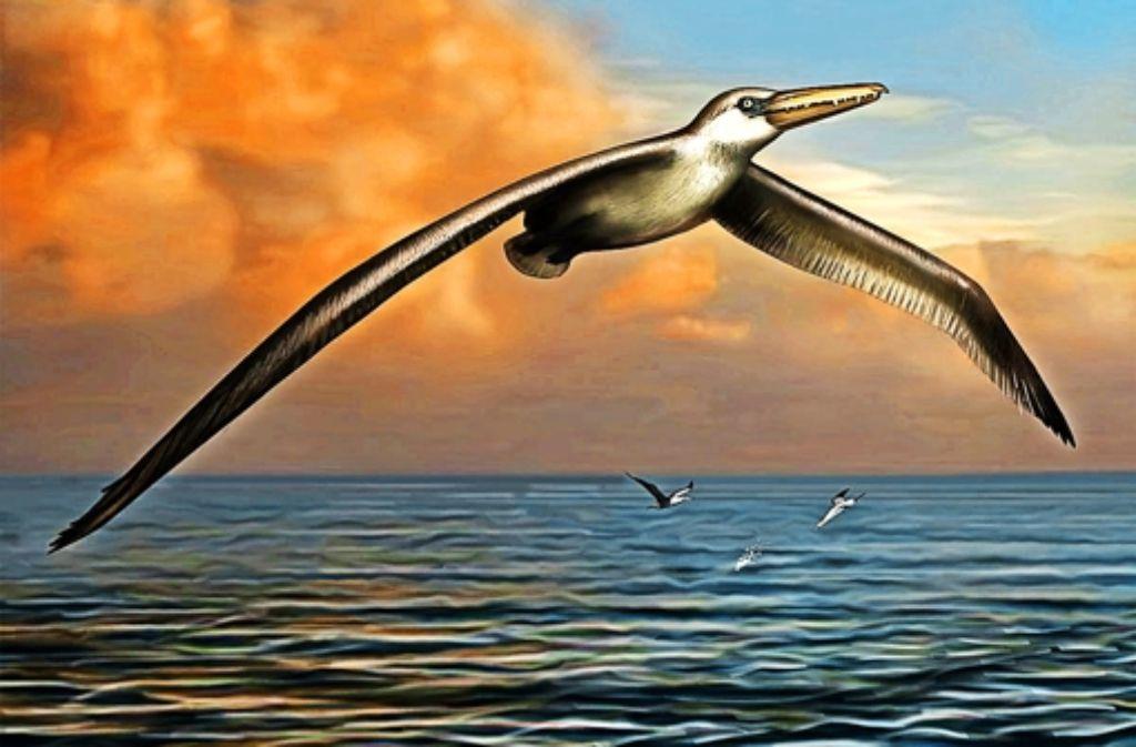 So könnte der riesige Vogel Pelagornis sandersi ausgesehen haben. Foto: dpa