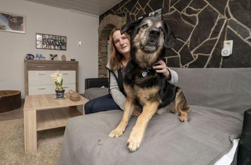 Warum Hund Schnuffel einen traurigen Rekord hält