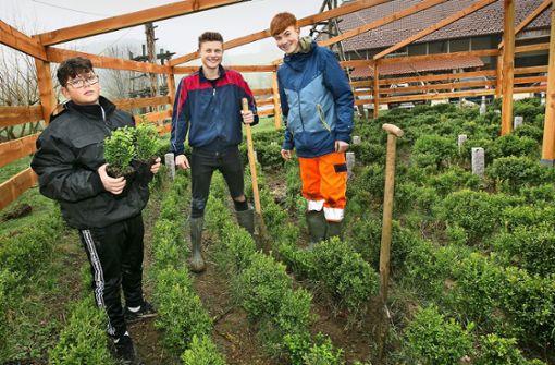 Jugendliche bauen Kunstlabyrinth in der Natur