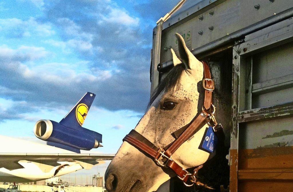 Pferd  statt Geschäftsflieger: Die VHS bietet Reitkurse für Führungskräfte an. Foto: dpa