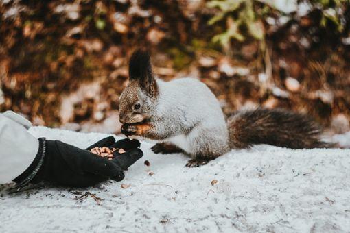 Wie Stuttgart im Winter ein Herz für Tiere zeigen kann
